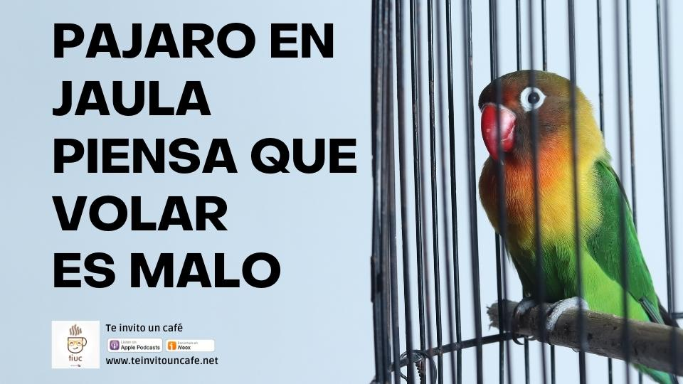 1277. Un pájaro en jaula piensa que volar es una enfermedad